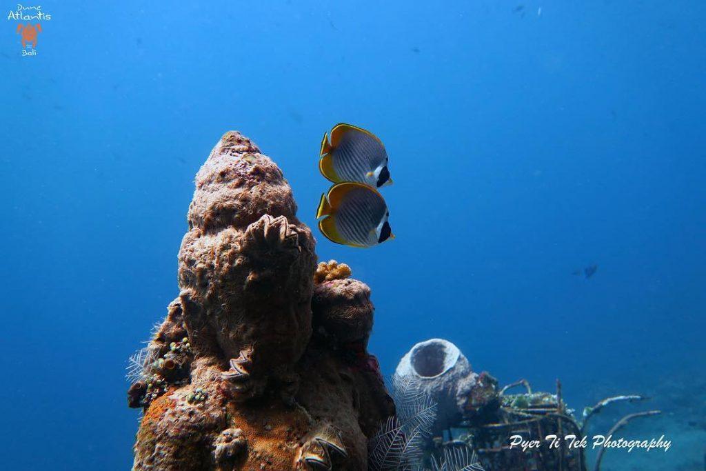 Faites d'importantes découvertes sous marines avec uncentre de plongée bali