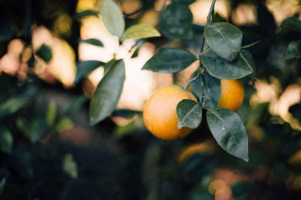 Choisissez une livraison bio de vos fruits pour votre santé
