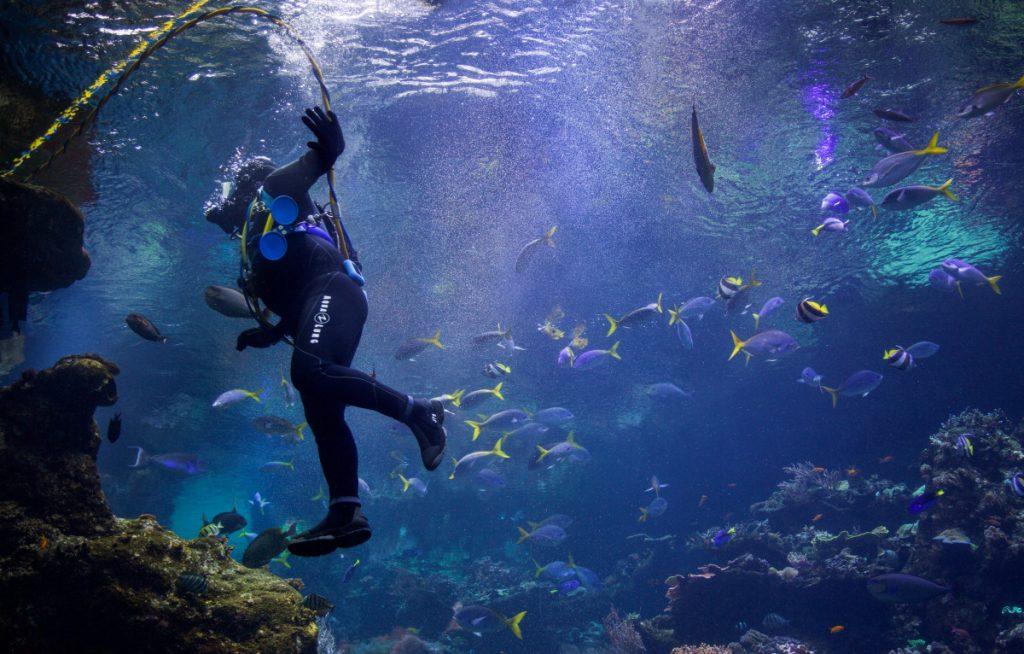 Meilleurs Centres de Plongéeà Bali Ou Apprendre LaPlongée Sous-Marineà Bali