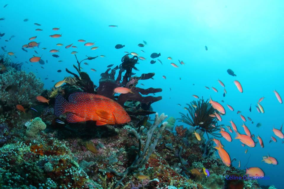 Baptême Plongée Bali laisserait une impression durable