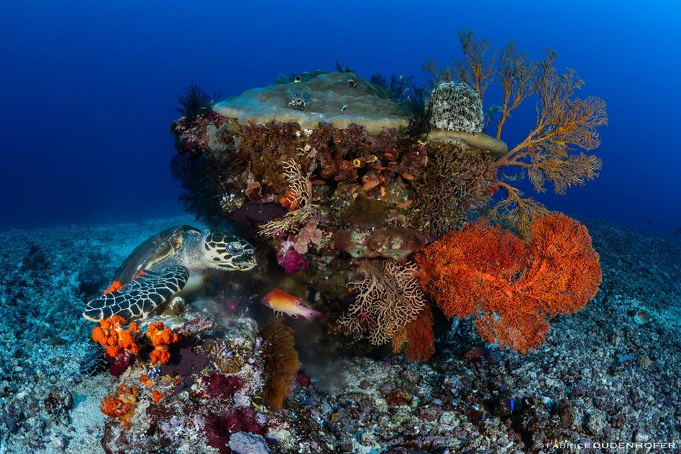 Choisir amed plongée pour un voyage plein de découvertes