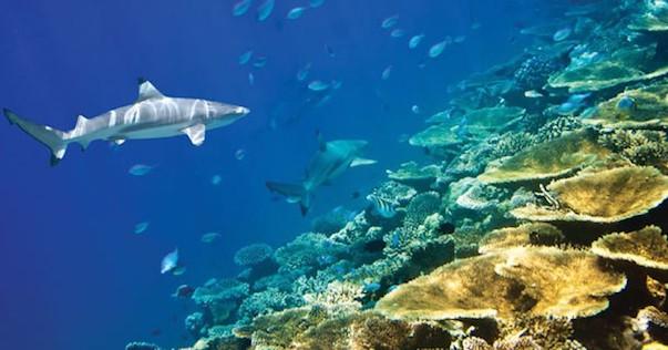 Bali amed plongée