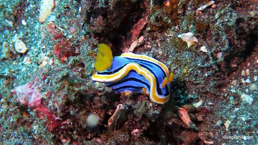 Plongée Amed à Bali